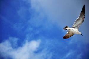 大空を舞う鳥