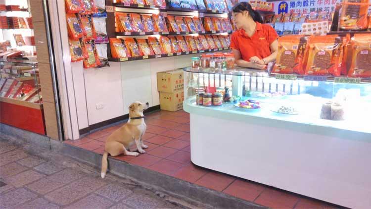 お店の人と犬