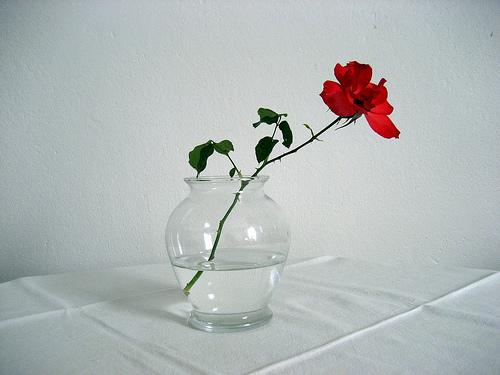 花瓶に入った一本の赤い薔薇