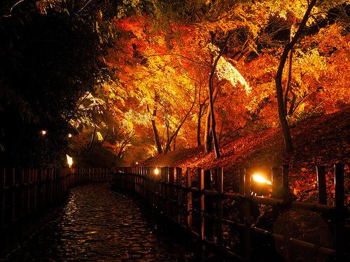 紅葉の楓が並ぶ公園